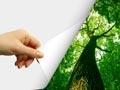Orman - Kağıt - Mobilya Sektörü